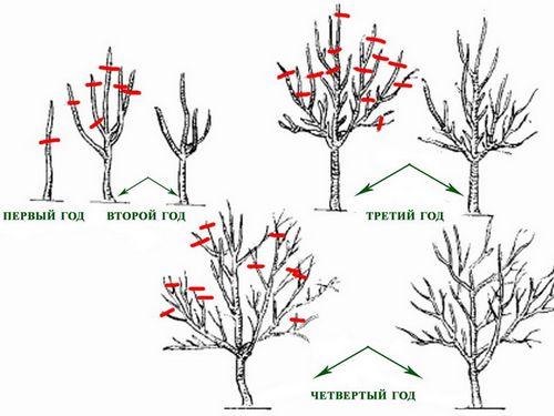 Как сажать вишню весной пошаговая инструкция 68