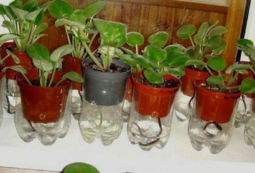 Система полива своими руками комнатных растений 702